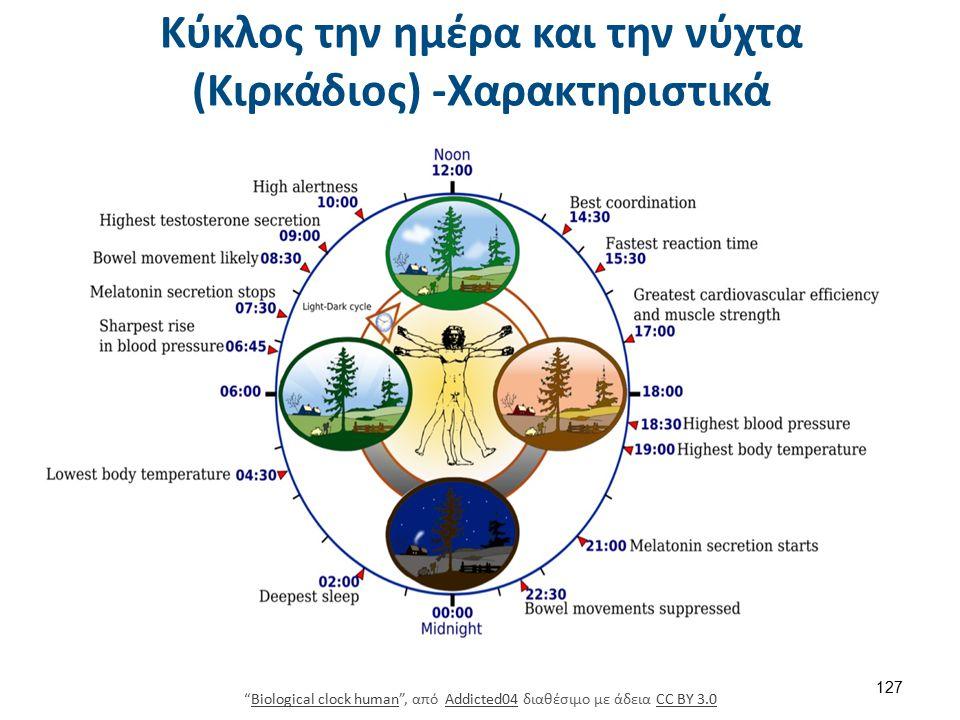 Biological clock human , από Addicted04 διαθέσιμο με άδεια CC BY 3.0Biological clock humanAddicted04CC BY 3.0 Κύκλος την ημέρα και την νύχτα (Κιρκάδιος) -Χαρακτηριστικά 127