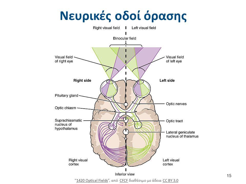 Νευρικές οδοί όρασης 1420 Optical Fields , από CFCF διαθέσιμο με άδεια CC BY 3.01420 Optical FieldsCFCFCC BY 3.0 15