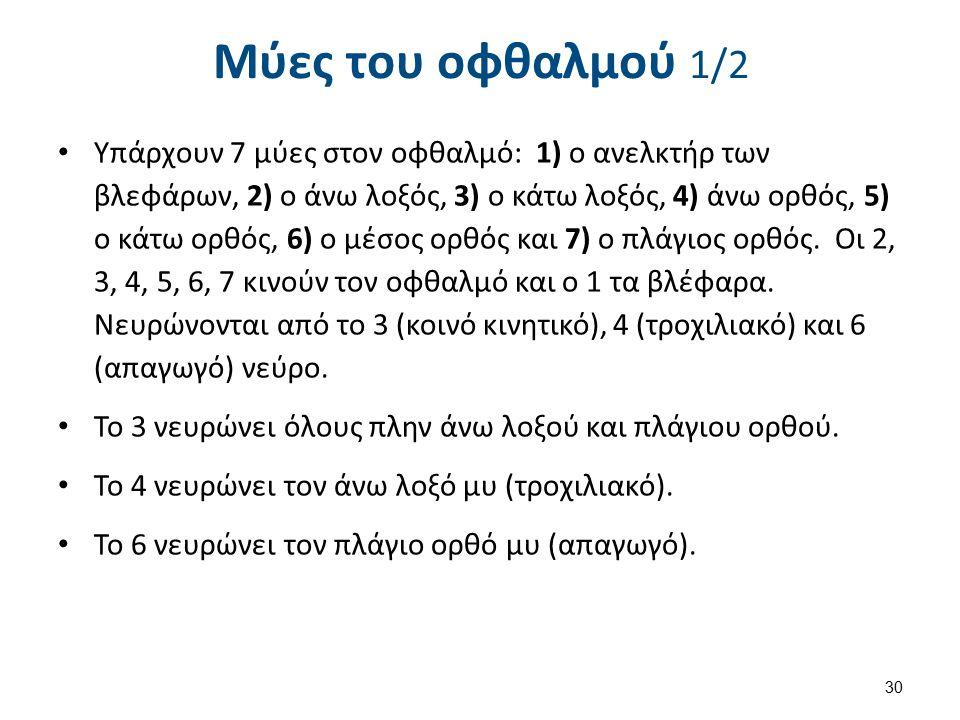 Υπάρχουν 7 μύες στον οφθαλμό: 1) ο ανελκτήρ των βλεφάρων, 2) ο άνω λοξός, 3) ο κάτω λοξός, 4) άνω ορθός, 5) ο κάτω ορθός, 6) ο μέσος ορθός και 7) ο πλάγιος ορθός.