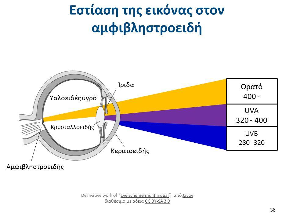 Ορατό 400 - UVA 320 - 400 UVB 280- 320 Αμφιβληστροειδής Υαλοειδές υγρό Ίριδα Κρυσταλλοειδής Κερατοειδής Derivative work of Eye scheme mulitlingual , από Jacov διαθέσιμο με άδεια CC BY-SA 3.0Eye scheme mulitlingualJacovCC BY-SA 3.0 Εστίαση της εικόνας στον αμφιβληστροειδή 36