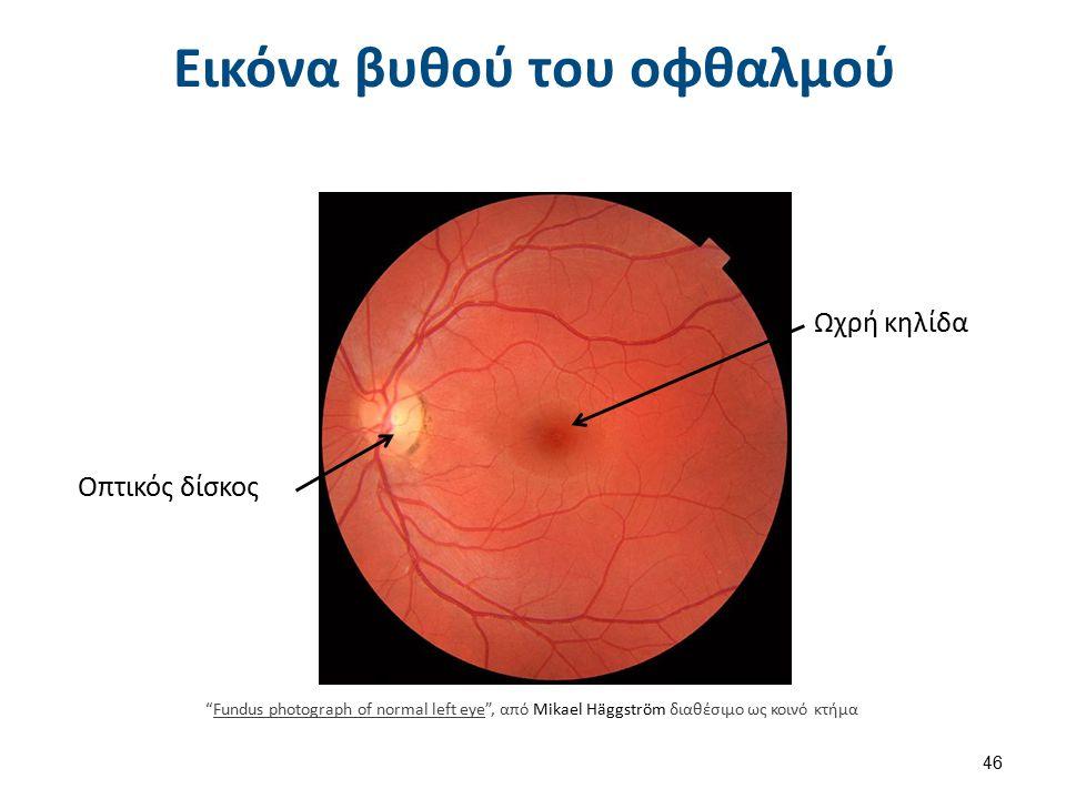 Εικόνα βυθού του οφθαλμού Ωχρή κηλίδα Οπτικός δίσκος Fundus photograph of normal left eye , από Mikael Häggström διαθέσιμο ως κοινό κτήμαFundus photograph of normal left eye 46