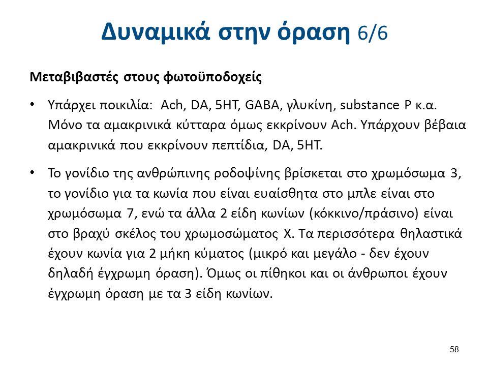 Μεταβιβαστές στους φωτοϋποδοχείς Υπάρχει ποικιλία: Ach, DA, 5HT, GABA, γλυκίνη, substance P κ.α.