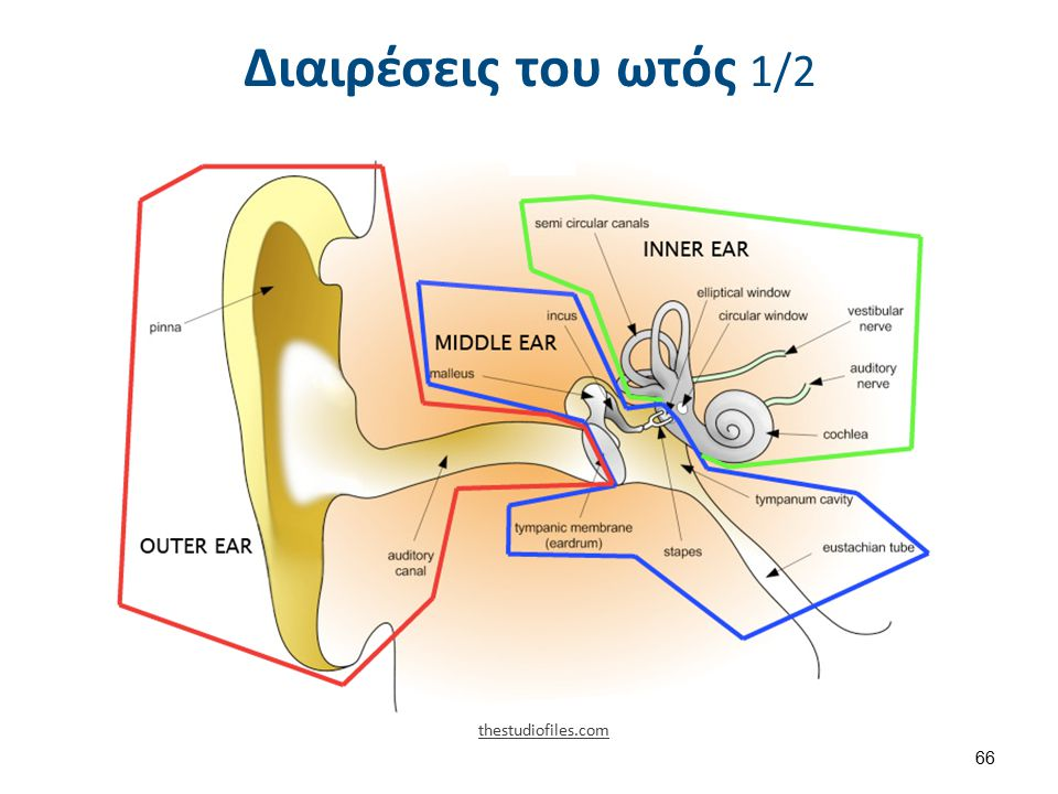 Διαιρέσεις του ωτός 1/2 thestudiofiles.com 66