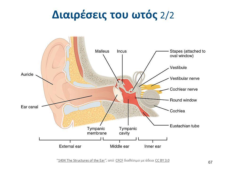 Διαιρέσεις του ωτός 2/2 1404 The Structures of the Ear , από CFCF διαθέσιμο με άδεια CC BY 3.01404 The Structures of the EarCFCFCC BY 3.0 67