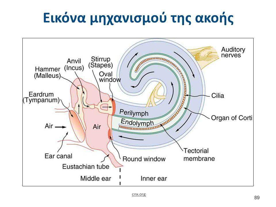 cnx.org Εικόνα μηχανισμού της ακοής 89
