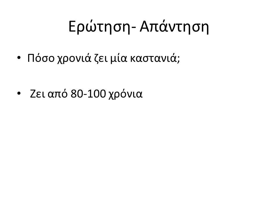 Ερώτηση- Απάντηση Πόσο χρονιά ζει μία καστανιά; Ζει από 80-100 χρόνια