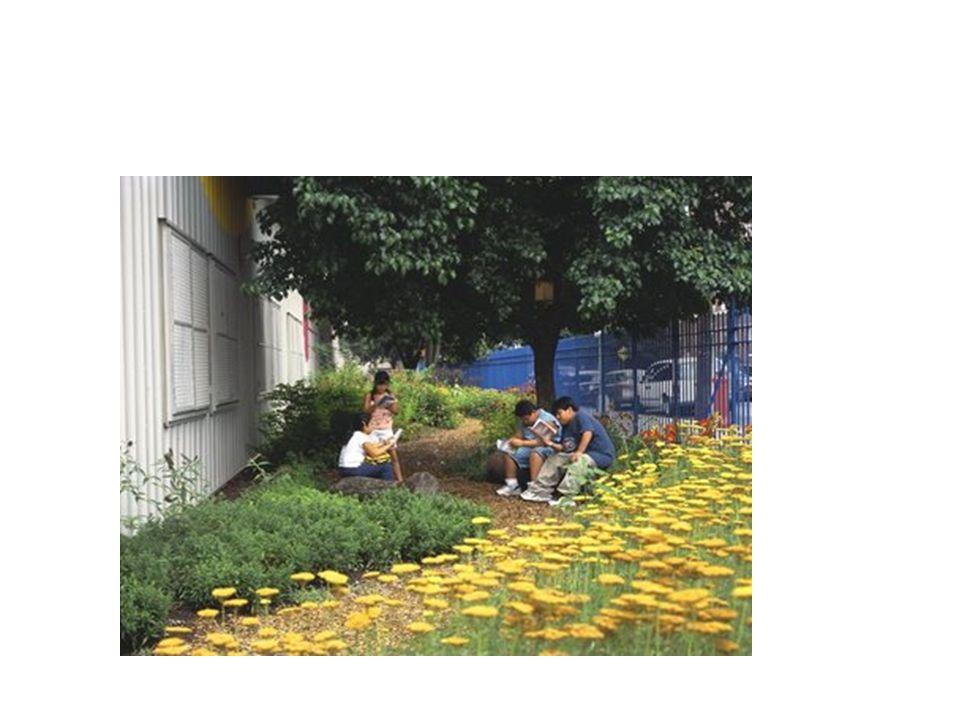 Τι θα χρειαστούμε και πόσο θα κοστίσει ο σχολικός μας κήπος; Τόπος: δημοτικό ή ιδιωτικό ή δασικό φυτώριο Διάρκεια: ανάλογα με το χώρο της διδακτικής επίσκεψης ΔΙΑΔΙΚΑΣΙΑ 1)Χωριστείτε σε ομάδες ανάλογα με τα είδη των φυτών που επιθυμείτε να φυτεύσετε (δένδρα, αρωματικά φυτά, ανθοφόρα, λαχανικά) 2) Μετρήστε τις διαστάσεις του χώρου που αντιστοιχεί για φύτευση σε κάθε ομάδα 3) Επισκεφθείτε ένα φυτώριο και ρωτήστε: τι είδους και πόσα φυτά θα χρειαστεί κάθε ομάδα πόσο θα κοστίσουν τα φυτά, τα εργαλεία καλλιέργειας τι είδους ποτιστικό σύστημα θα χρειαστεί, πόσο θα κοστίσει