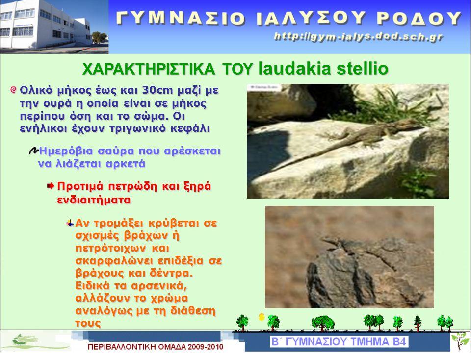 O θαυμαστός κόσμος ενός ξεχασμένου βασιλείου Κουρκούταυλος laudakia stellio ΠΕΡΙΒΑΛΛΟΝΤΙΚΗ ΟΜΑΔΑ ΓΥΜΝΑΣΙΟΥ ΙΑΛΥΣΟΥ ΡΟΔΟΥ ΔΗΜΟΣ ΙΑΛΥΣΟΥ