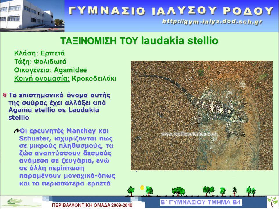 ΧΑΡΑΚΤΗΡΙΣΤΙΚΑ ΤΟΥ laudakia stellio Ολικό μήκος έως και 30cm μαζί με την ουρά η οποία είναι σε μήκος περίπου όση και το σώμα.