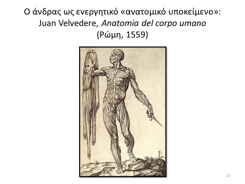 Ο άνδρας ως ενεργητικό «ανατομικό υποκείμενο»: Juan Velvedere, Anatomia del corpo umano (Ρώμη, 1559) 23