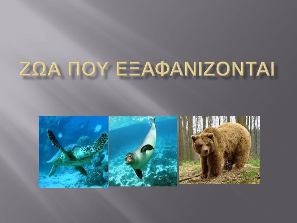 Διδακτικοί στόχοι: Να γνωρίσουν απειλούμενα είδη ζώων και να συσχετίσουν τις δραστηριότητες του ανθρώπου με την καταστροφή του φυσικού περιβάλλοντος.