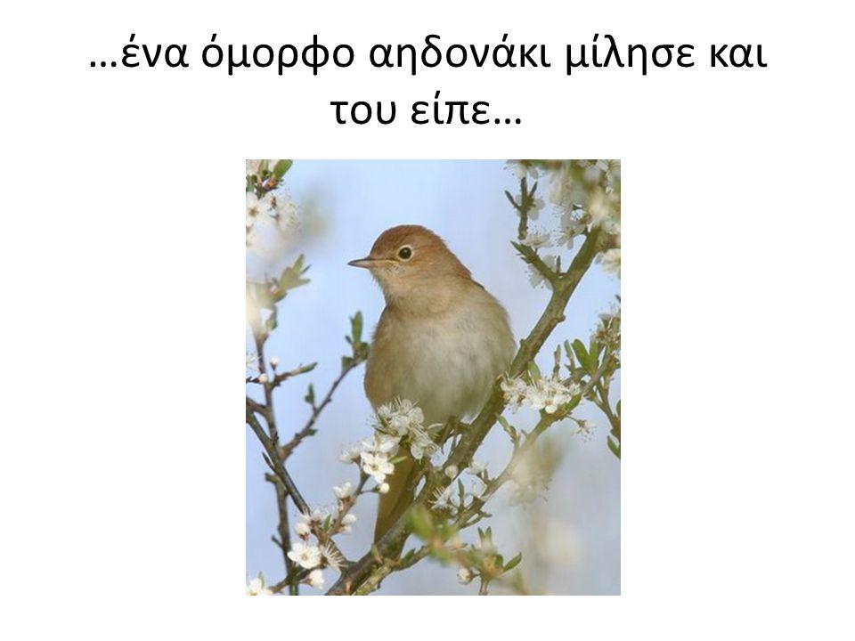 …ένα όμορφο αηδονάκι μίλησε και του είπε…