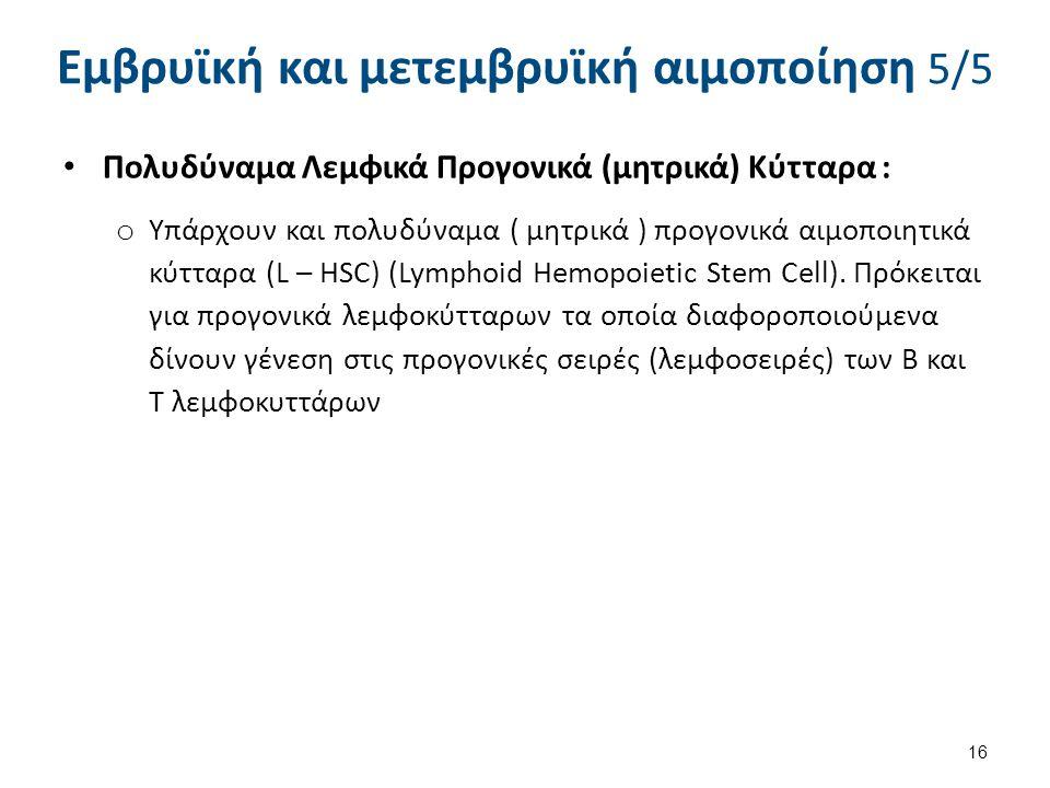 Εμβρυϊκή και μετεμβρυϊκή αιμοποίηση 5/5 Πολυδύναμα Λεμφικά Προγονικά (μητρικά) Κύτταρα : o Υπάρχουν και πολυδύναμα ( μητρικά ) προγονικά αιμοποιητικά