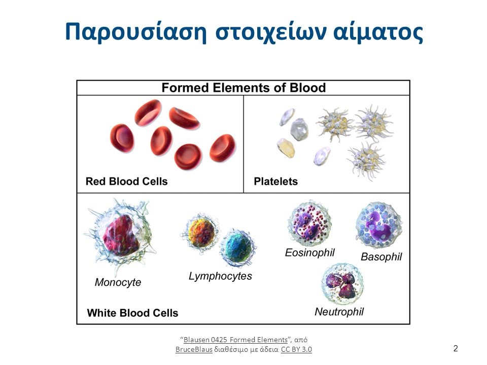 """Παρουσίαση στοιχείων αίματος 2 """"Blausen 0425 Formed Elements"""", από BruceBlaus διαθέσιμο με άδεια CC BY 3.0Blausen 0425 Formed Elements BruceBlausCC BY"""