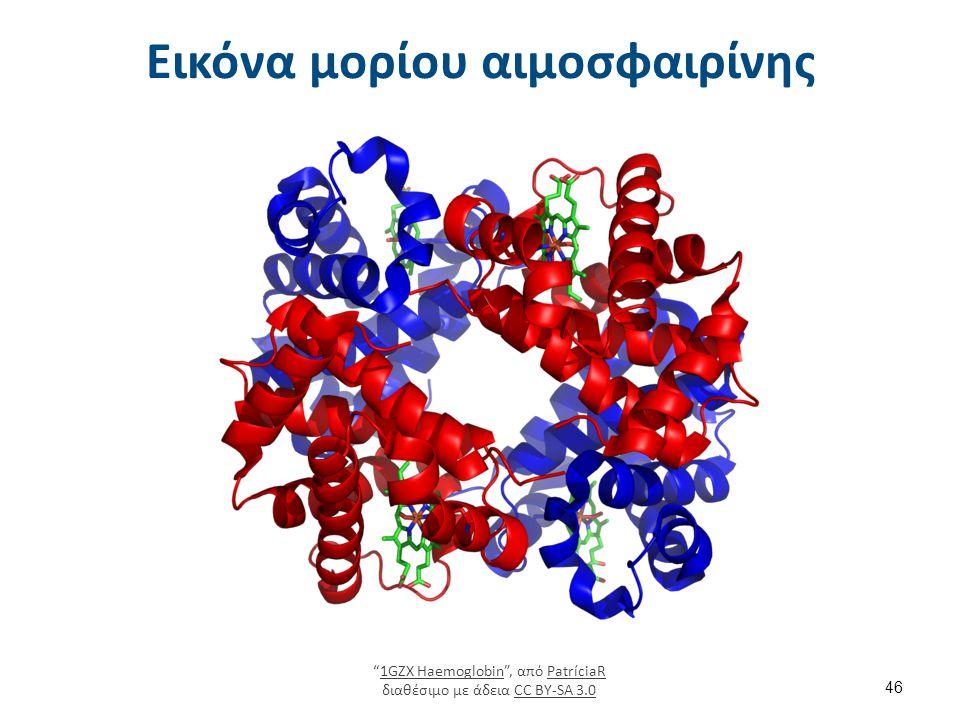 """Εικόνα μορίου αιμοσφαιρίνης """"1GZX Haemoglobin"""", από PatríciaR διαθέσιμο με άδεια CC BY-SA 3.01GZX HaemoglobinPatríciaRCC BY-SA 3.0 46"""