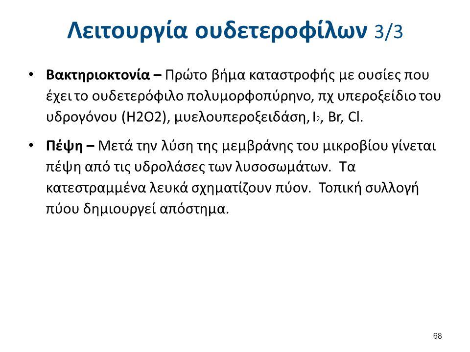 Λειτουργία ουδετεροφίλων 3/3 Βακτηριοκτονία – Πρώτο βήμα καταστροφής με ουσίες που έχει το ουδετερόφιλο πολυμορφοπύρηνο, πχ υπεροξείδιο του υδρογόνου