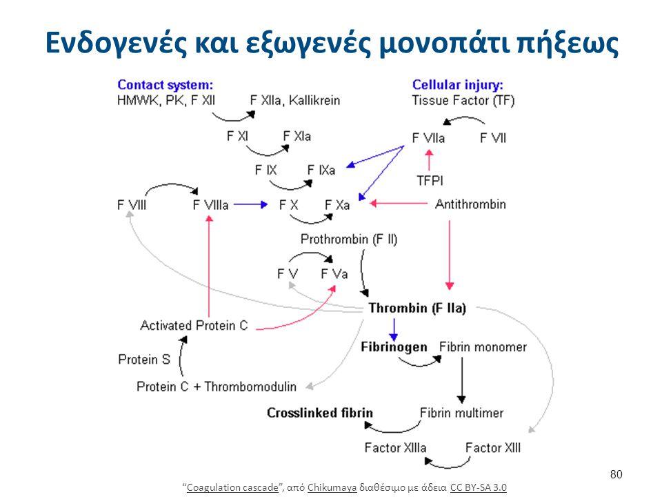 """Ενδογενές και εξωγενές μονοπάτι πήξεως """"Coagulation cascade"""", από Chikumaya διαθέσιμο με άδεια CC BY-SA 3.0Coagulation cascadeChikumayaCC BY-SA 3.0 80"""