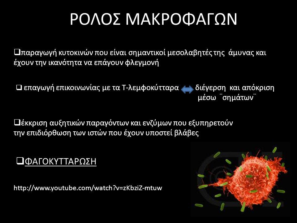 κακή φλεγμονή Βραχεία και πολύ μεγάλης έντασης κατά την φαγοκυττάρωση, τα πρωτεολυτικά ένζυμα μπορεί να απελευθερωθούν στον εξωκυττάριο χώρο και να προξενήσουν βλάβη στον ιστό του ξενιστή Χρόνια και χαμηλής έντασης παρατεταμένη και ανεξέλεγκτη φλεγμονή που εμπλέκεται με διάφορες ασθένειες
