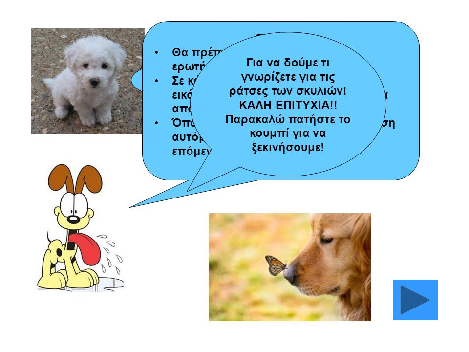 Καλώς ήρθατε στο παιχνίδι με σκύλους!! ΟΔΗΓΙΕΣ Θα πρέπει να απαντήσετε σε 15 ερωτήσεις. Σε κάθε ερώτηση θα υπάρχει και μία εικόνα που θα σας δίνει βοή