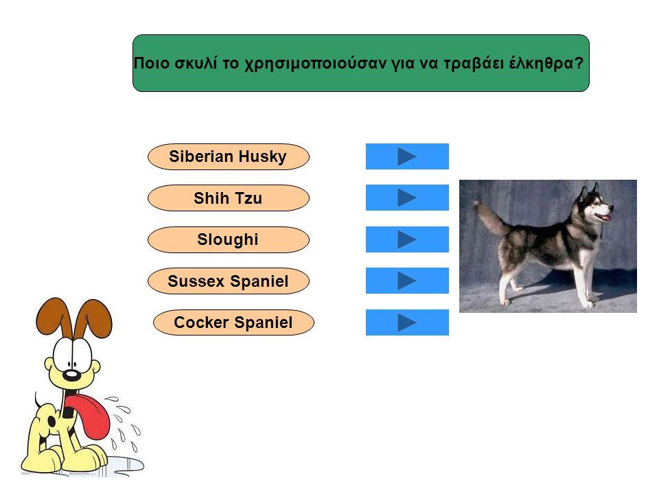 Ποιο σκυλί το χρησιμοποιούσαν για να τραβάει έλκηθρα? Siberian Husky Shih Tzu Sloughi Sussex Spaniel Cocker Spaniel