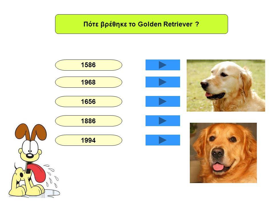 Πότε βρέθηκε το Golden Retriever ? 1586 1968 1656 1886 1994