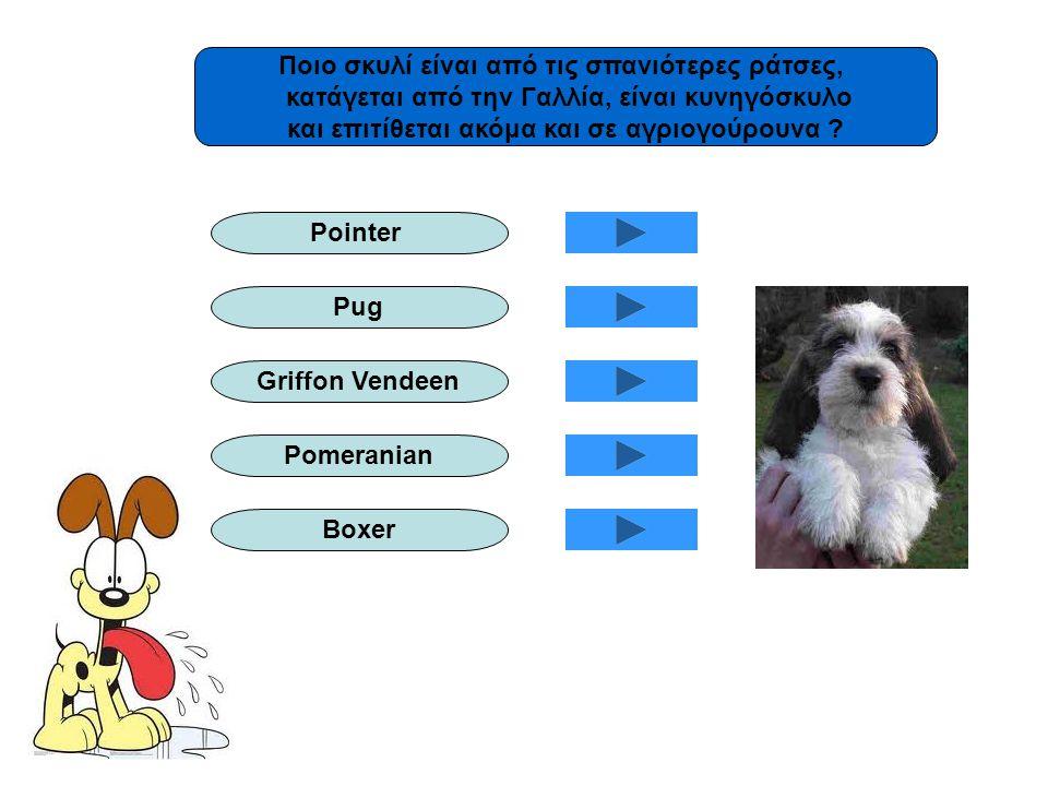 Ποιο σκυλί είναι από τις σπανιότερες ράτσες, κατάγεται από την Γαλλία, είναι κυνηγόσκυλο και επιτίθεται ακόμα και σε αγριογούρουνα ? Pointer Pug Griff