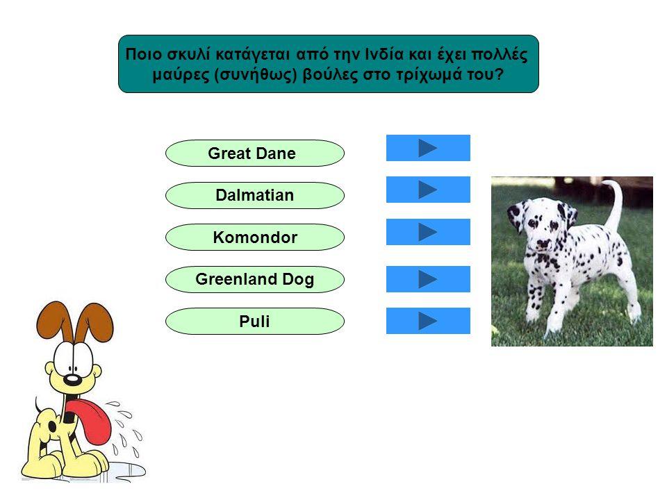 Ποιο σκυλί κατάγεται από την Ινδία και έχει πολλές μαύρες (συνήθως) βούλες στο τρίχωμά του? Great Dane Dalmatian Komondor Greenland Dog Puli