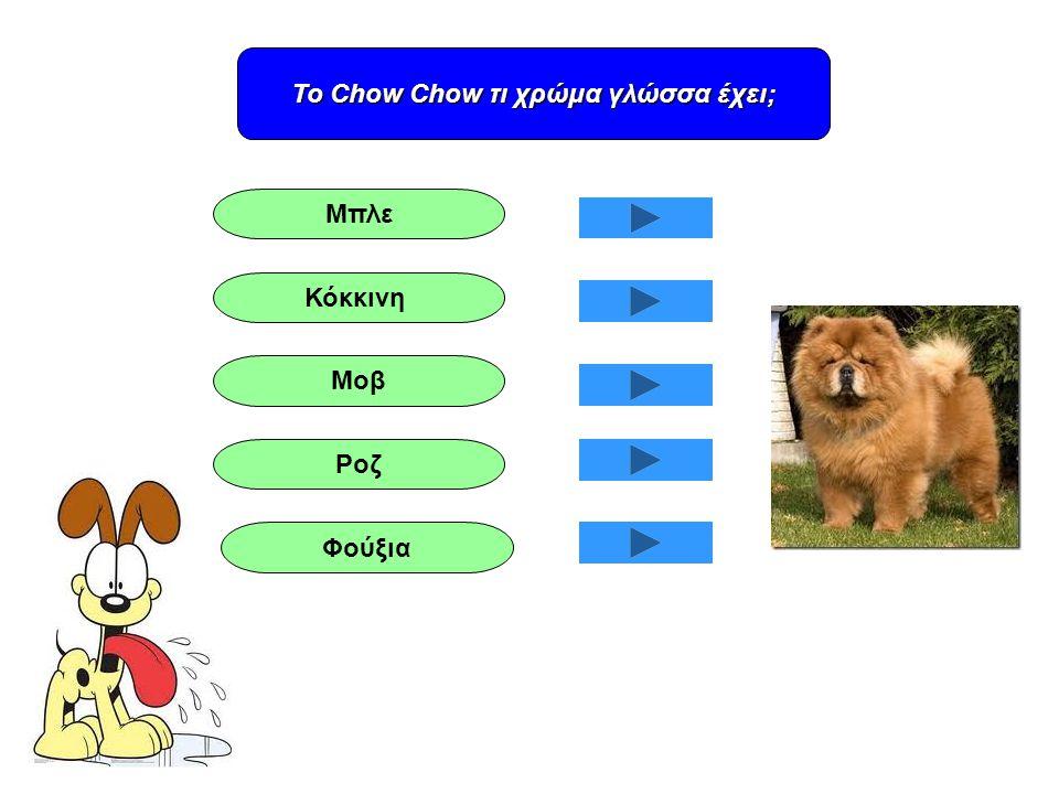 Το Chow Chow τι χρώμα γλώσσα έχει; Φούξια Ροζ Μοβ Κόκκινη Μπλε