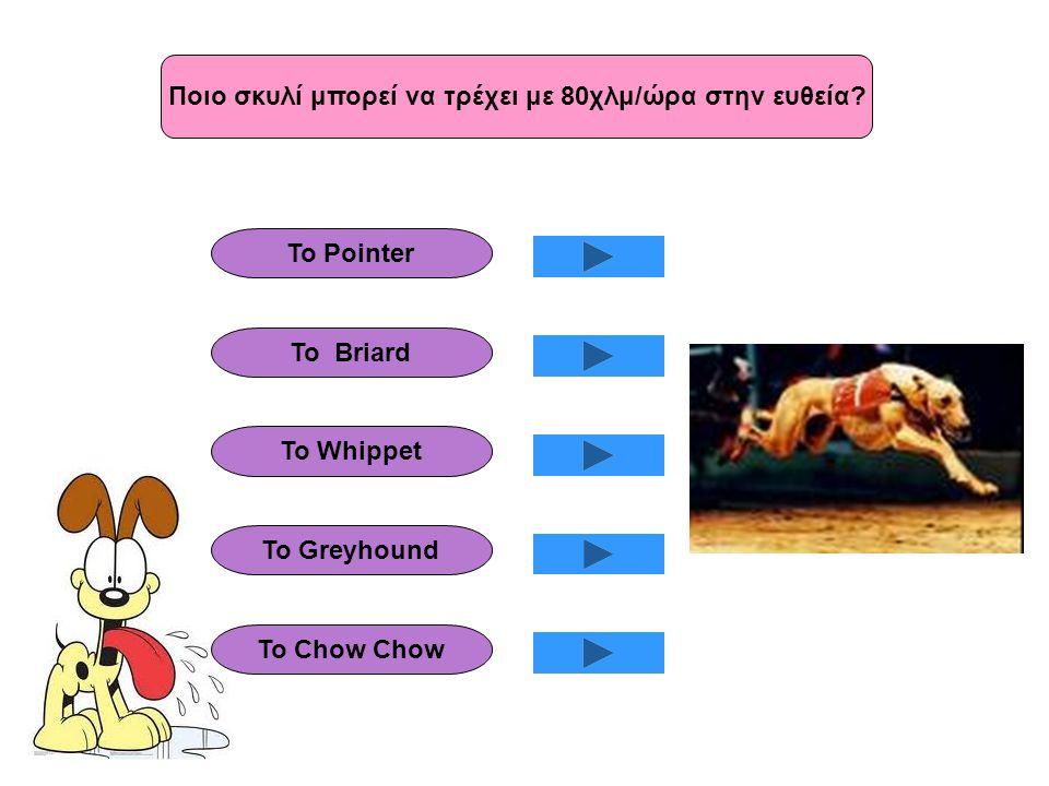 Ποιο σκυλί μπορεί να τρέχει με 80χλμ/ώρα στην ευθεία? Το Pointer Το Briard Το Whippet To Greyhound Το Chow Chow