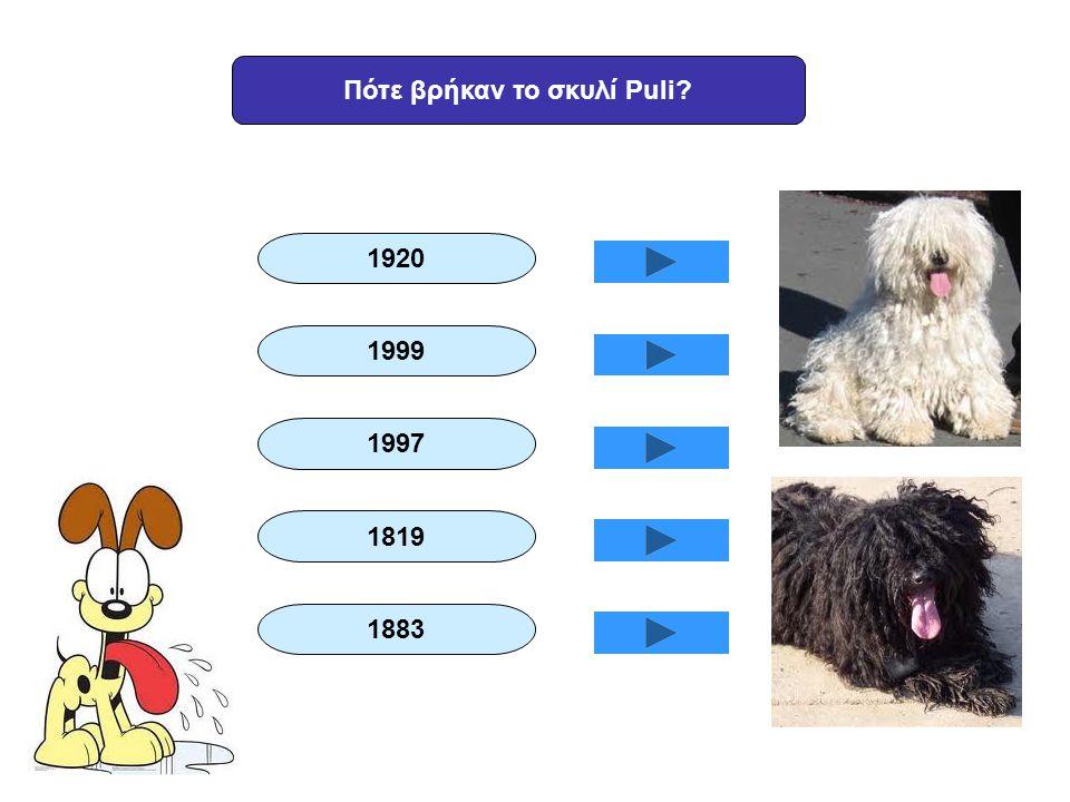 Πότε βρήκαν το σκυλί Puli? 1920 1999 1997 1819 1883