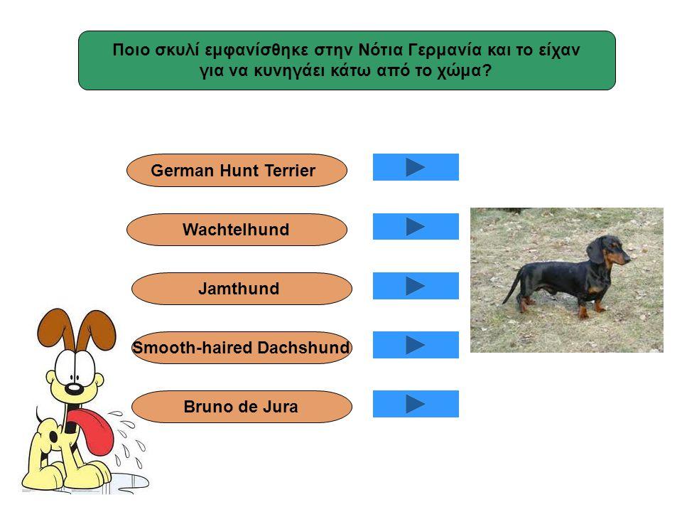 Ποιο σκυλί εμφανίσθηκε στην Νότια Γερμανία και το είχαν για να κυνηγάει κάτω από το χώμα? Smooth-haired Dachshund Jamthund Wachtelhund German Hunt Ter