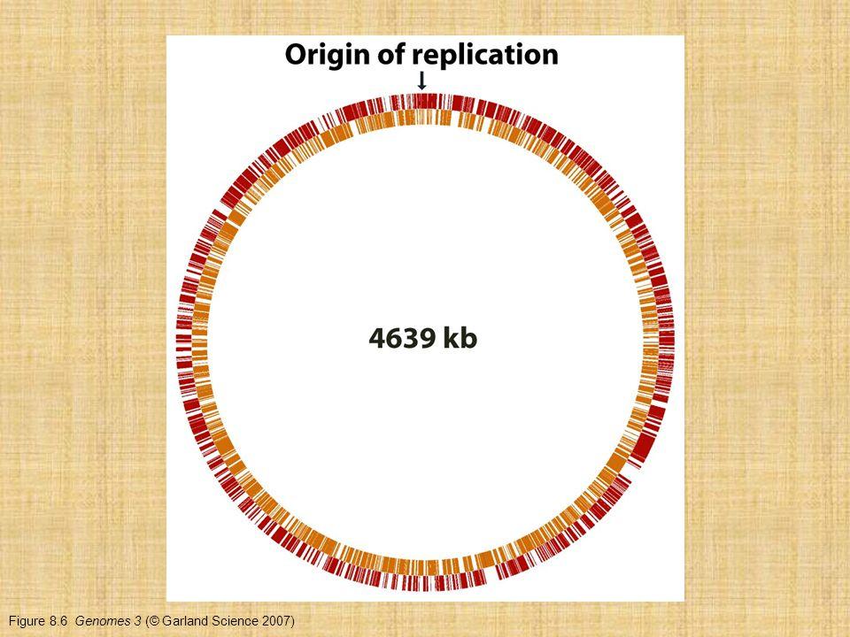 Figure 8.6 Genomes 3 (© Garland Science 2007)