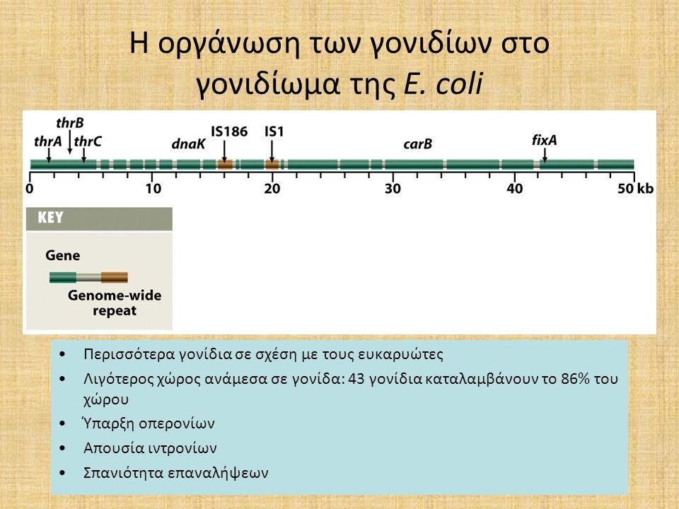 Η οργάνωση των γονιδίων στο γονιδίωμα της E. coli Περισσότερα γονίδια σε σχέση με τους ευκαρυώτες Λιγότερος χώρος ανάμεσα σε γονίδα: 43 γονίδια καταλα