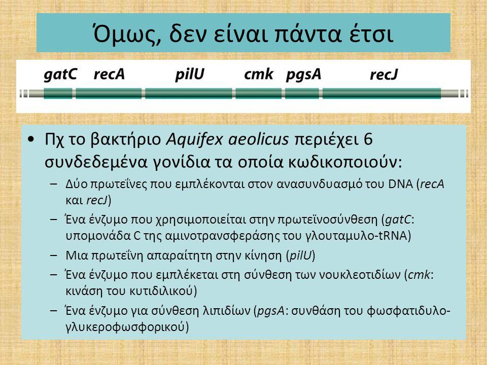 Όμως, δεν είναι πάντα έτσι Πχ το βακτήριο Aquifex aeolicus περιέχει 6 συνδεδεμένα γονίδια τα οποία κωδικοποιούν: –Δύο πρωτεΐνες που εμπλέκονται στον α