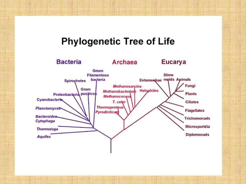 Φυσικά χαρακτηριστικά προκαρυωτικών γονιδιωμάτων