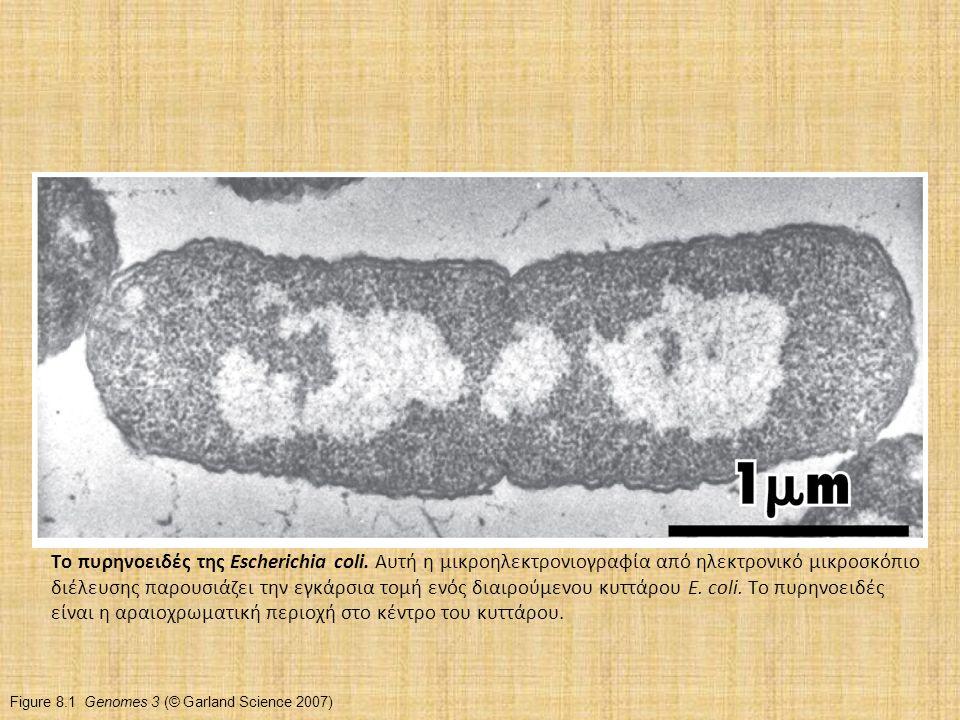 Figure 8.1 Genomes 3 (© Garland Science 2007) Το πυρηνοειδές της Escherichia coli. Αυτή η μικροηλεκτρονιογραφία από ηλεκτρονικό μικροσκόπιο διέλευσης