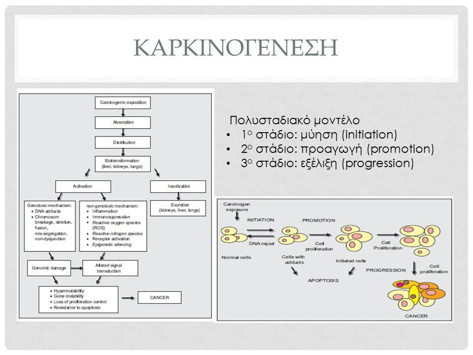 ΚΑΡΚΙΝΟΓΕΝΕΣΗ Πολυσταδιακό μοντέλο 1 ο στάδιο: μύηση (initiation) 2 ο στάδιο: προαγωγή (promotion) 3 ο στάδιο: εξέλιξη (progression)