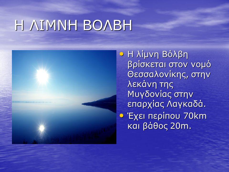 Η ΛΙΜΝΗ ΒΟΛΒΗ Η λίμνη Βόλβη βρίσκεται στον νομό Θεσσαλονίκης, στην λεκάνη της Μυγδονίας στην επαρχίας Λαγκαδά. Έχει περίπου 70km και βάθος 20m.