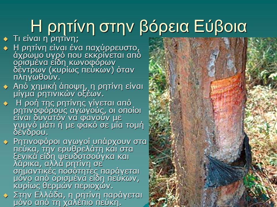 Η ρητίνη στην βόρεια Εύβοια  Τι είναι η ρητίνη;  Η ρητίνη είναι ένα παχύρρευστο, άχρωμο υγρό που εκκρίνεται από ορισμένα είδη κωνοφόρων δέντρων (κυρίως πεύκων) όταν πληγωθούν.
