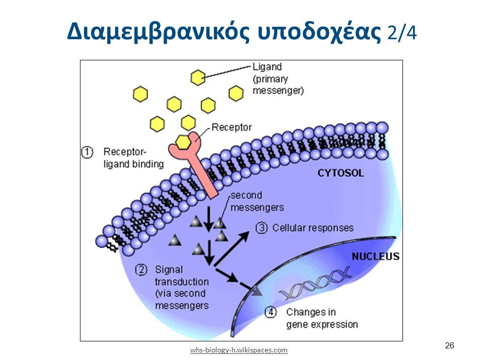 Διαμεμβρανικός υποδοχέας 2/4 whs-biology-h.wikispaces.com 26