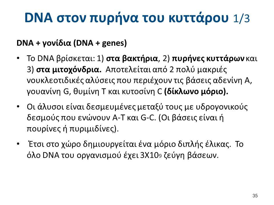 DNA στον πυρήνα του κυττάρου 1/3 DNA + γονίδια (DNA + genes) To DNA βρίσκεται: 1) στα βακτήρια, 2) πυρήνες κυττάρων και 3) στα μιτοχόνδρια. Αποτελείτα