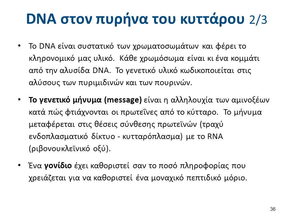 DNA στον πυρήνα του κυττάρου 2/3 Το DNA είναι συστατικό των χρωματοσωμάτων και φέρει το κληρονομικό μας υλικό. Κάθε χρωμόσωμα είναι κι ένα κομμάτι από