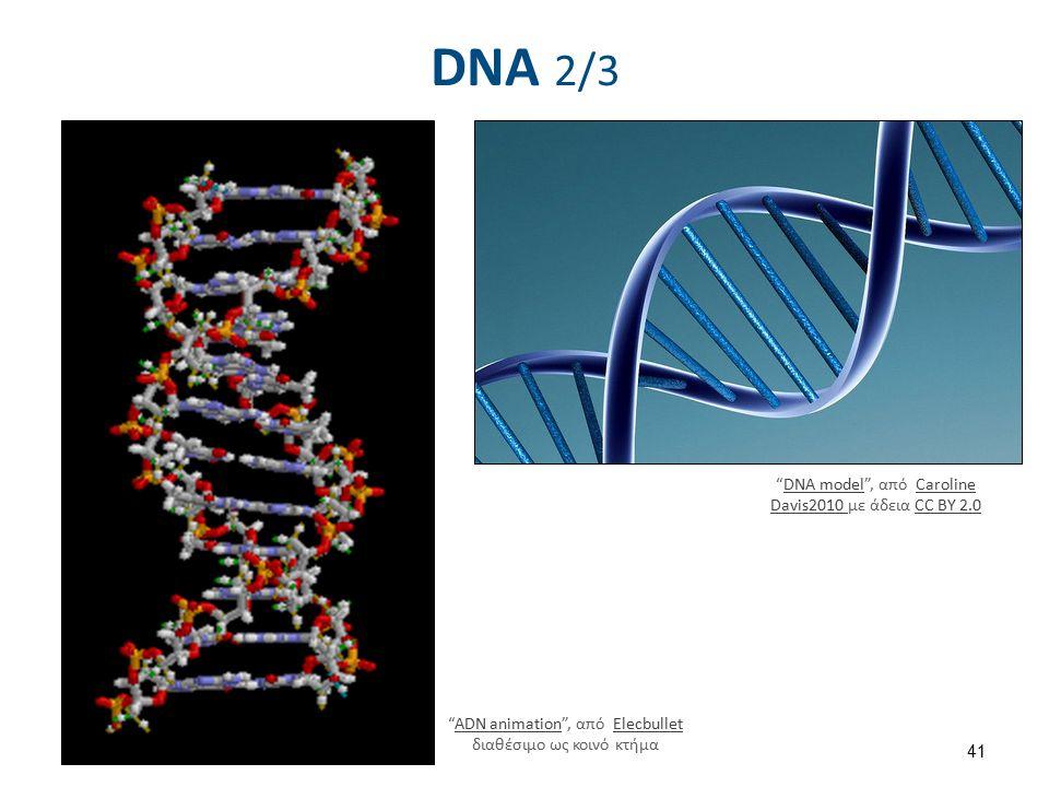 """DNA 2/3 """"ADN animation"""", από Elecbullet διαθέσιμο ως κοινό κτήμαADN animationElecbullet """"DNA model"""", από Caroline Davis2010 με άδεια CC BY 2.0DNA mode"""