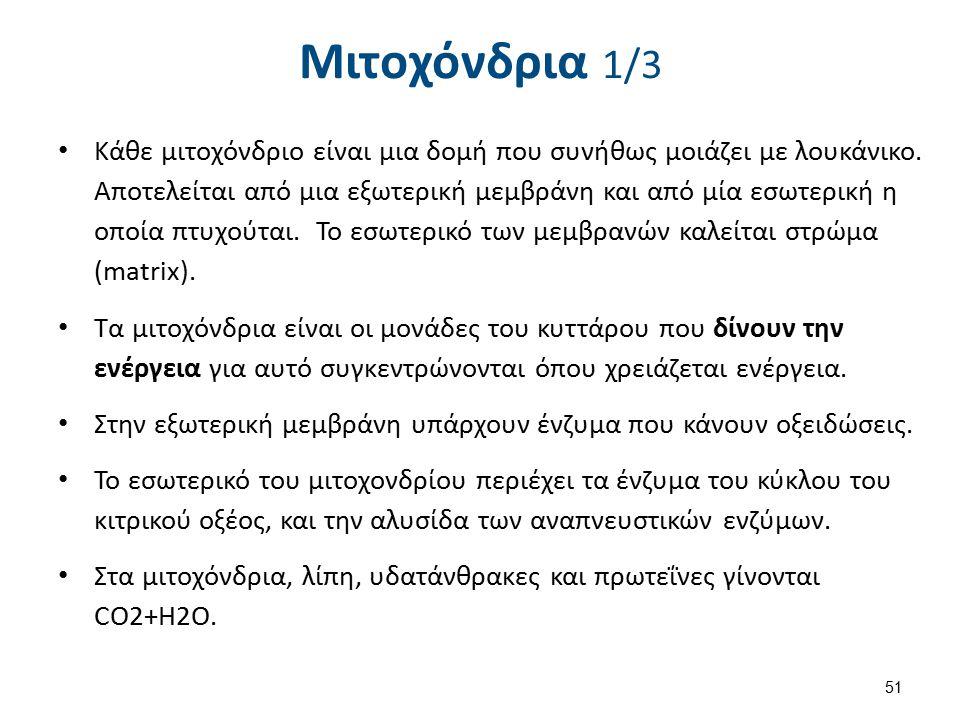 Μιτοχόνδρια 1/3 Κάθε μιτοχόνδριο είναι μια δομή που συνήθως μοιάζει με λουκάνικο. Αποτελείται από μια εξωτερική μεμβράνη και από μία εσωτερική η οποία