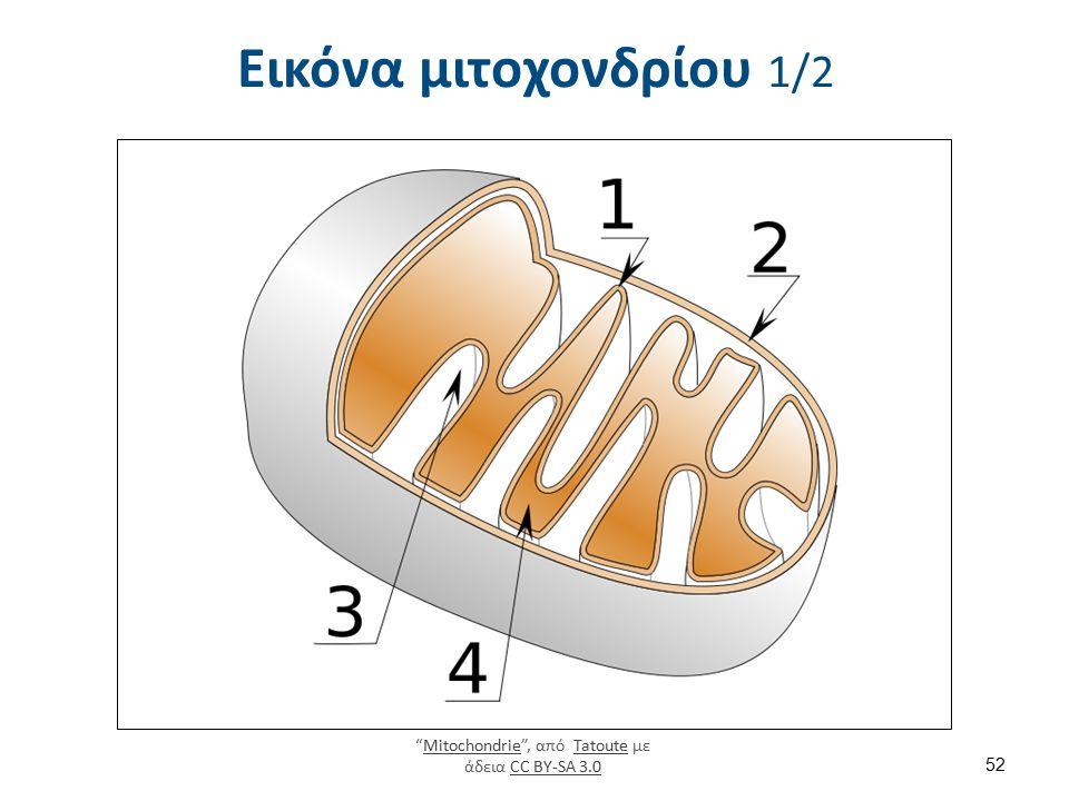 """Εικόνα μιτοχονδρίου 1/2 """"Mitochondrie"""", από Tatoute με άδεια CC BY-SA 3.0MitochondrieTatouteCC BY-SA 3.0 52"""