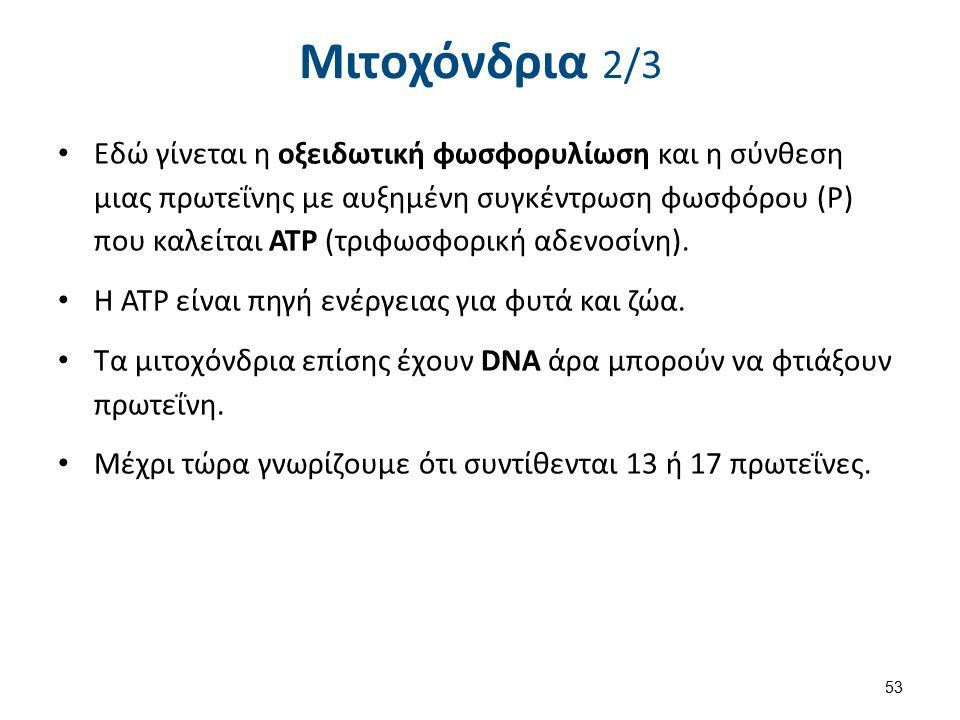 Μιτοχόνδρια 2/3 Εδώ γίνεται η οξειδωτική φωσφορυλίωση και η σύνθεση μιας πρωτεΐνης με αυξημένη συγκέντρωση φωσφόρου (Ρ) που καλείται ΑΤΡ (τριφωσφορική