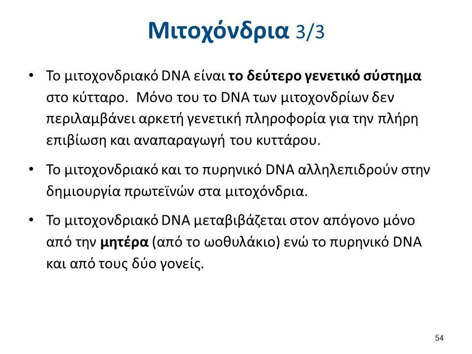 Μιτοχόνδρια 3/3 Το μιτοχονδριακό DNA είναι το δεύτερο γενετικό σύστημα στο κύτταρο. Μόνο του το DNA των μιτοχονδρίων δεν περιλαμβάνει αρκετή γενετική