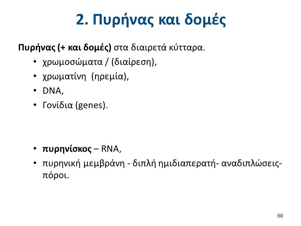 2. Πυρήνας και δομές Πυρήνας (+ και δομές) στα διαιρετά κύτταρα. χρωμοσώματα / (διαίρεση), χρωματίνη (ηρεμία), DNA, Γονίδια (genes). πυρηνίσκος – RNA,