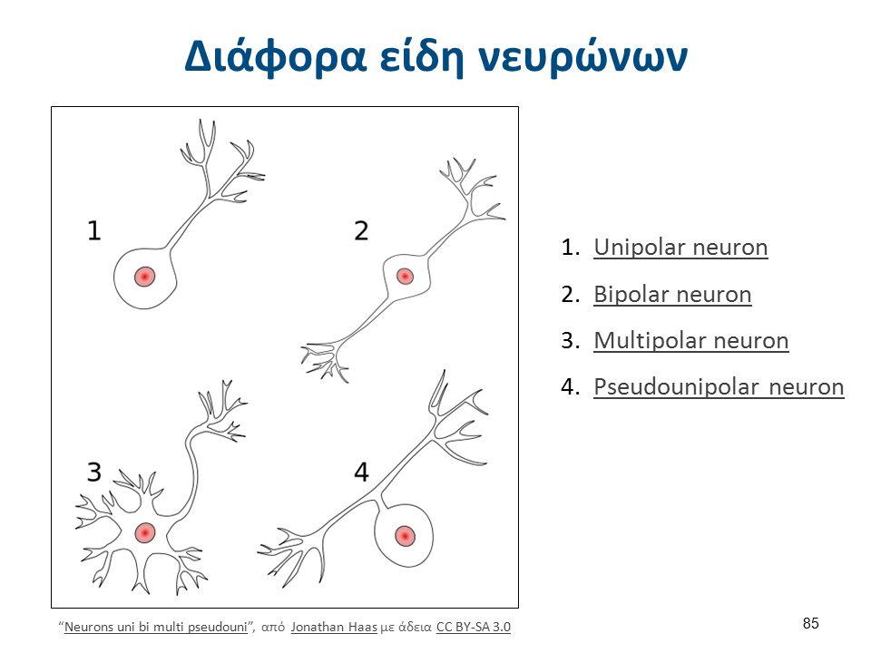 """Διάφορα είδη νευρώνων """"Neurons uni bi multi pseudouni"""", από Jonathan Haas με άδεια CC BY-SA 3.0Neurons uni bi multi pseudouniJonathan HaasCC BY-SA 3.0"""