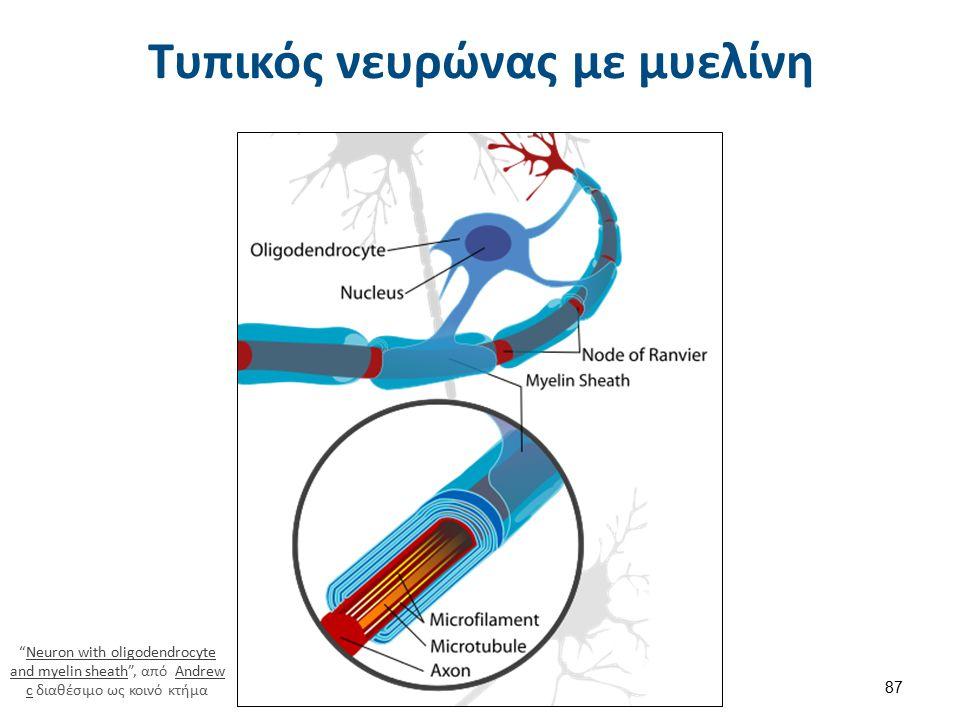 """Τυπικός νευρώνας με μυελίνη """"Neuron with oligodendrocyte and myelin sheath"""", από Andrew c διαθέσιμο ως κοινό κτήμαNeuron with oligodendrocyte and myel"""